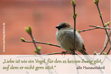 Vogel, Liebe